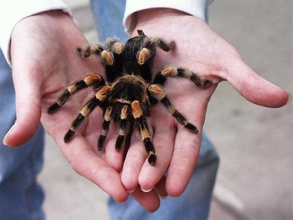 Ý nghĩa mơ thấy nhện?
