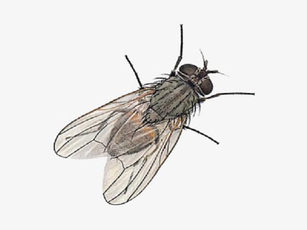 Mơ thấy con ruồi có điềm gì?
