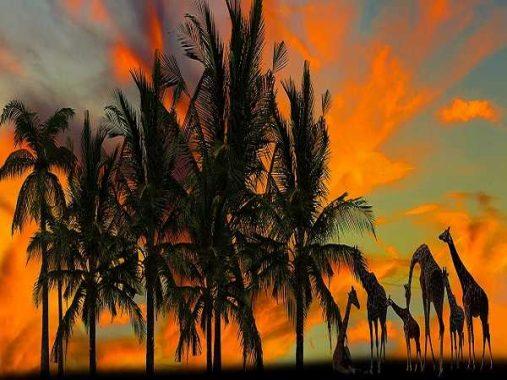 Nằm mơ thấy cây dừa điềm lành hay giữ