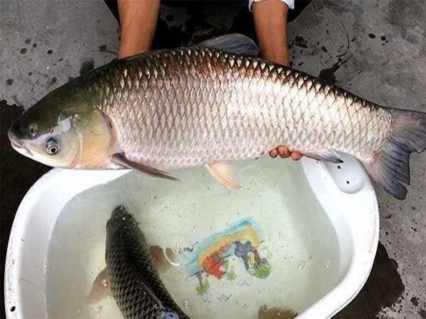 Mơ thấy bắt cá là điềm báo điều gì?