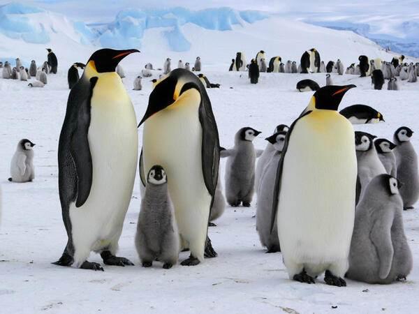 Mơ thấy chim cánh cụt lành hay dữ?