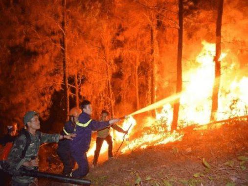 Ngủ mơ thấy cháy rừng là điềm báo tốt hay xấu ? Đánh đề con gì ?