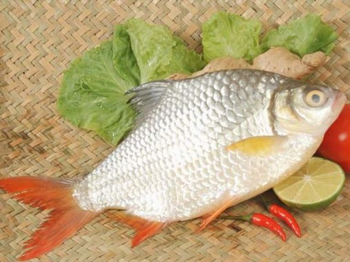 Mơ thấy cá mè là điềm gì? Đánh con gì vào bờ an toàn?