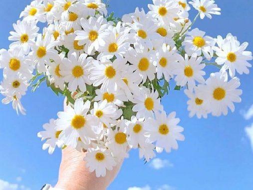 Phân tích ý nghĩa giấc mơ thấy hoa cúc đánh con gì may mắn?