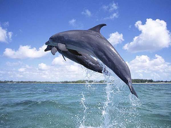 Ngủ mơ thấy cá heo - Chiêm bao thấy cá heo đánh con gì