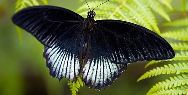 Giải mã giấc mơ thấy bướm bay vào nhà là điềm báo gì