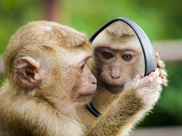Mơ thấy khỉ là điềm hung hay cát? Đánh con gì gặp may?