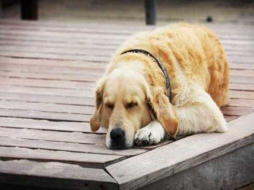 Nằm mơ thấy chó đánh số đề con gì ? Là điềm báo tốt hay xấu ?