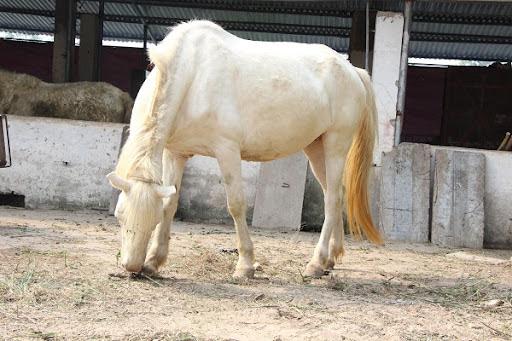 Mơ thấy con ngựa số mấy